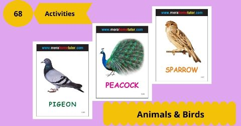Animals & Birds Activity Flash Cards